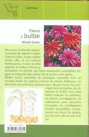 Fleurs à bulbe - 4ème de couverture - Format classique