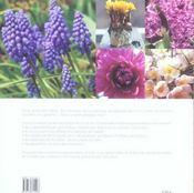 Les Tulipes Et Les Bulbes - 4ème de couverture - Format classique