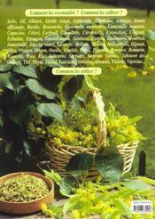 Plantes aromatiques et medicinales - 4ème de couverture - Format classique