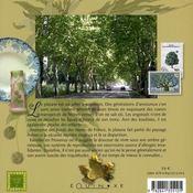 Le platane - 4ème de couverture - Format classique