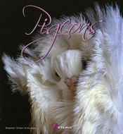 Pigeons de luxe - Intérieur - Format classique