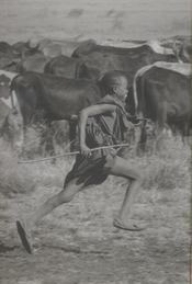 Africa ; la terre des origines - 4ème de couverture - Format classique