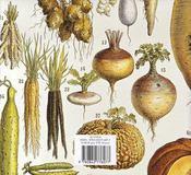 Le potager gourmand - 4ème de couverture - Format classique