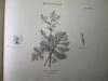 Album de Botanique. Herbier.