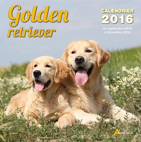 Golden retriever (2016)  - Collectif