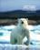 Arctique, un monde à protéger