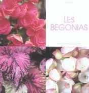 Les Begonias - Intérieur - Format classique