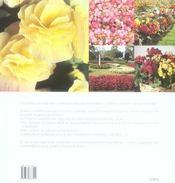 Les Begonias - 4ème de couverture - Format classique