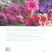 Les Azalees Et Les Rhododendrons - 4ème de couverture - Format classique