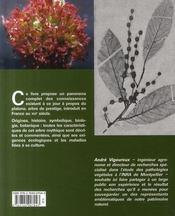 Le platane ; portrait, botanique, maladies - 4ème de couverture - Format classique