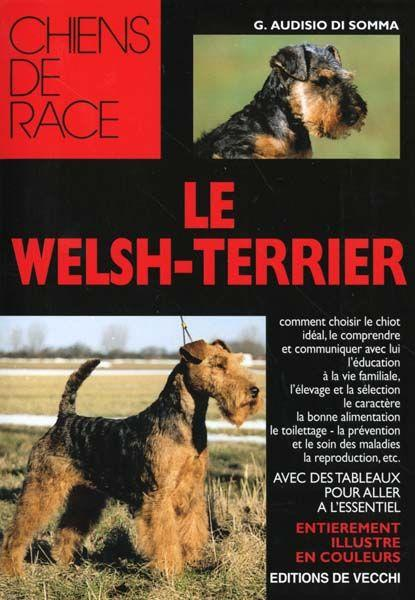 Welsh Terrier  - Audisio Di Somma