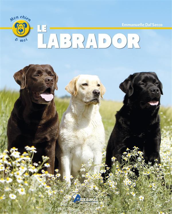Le labrador  - Collectif