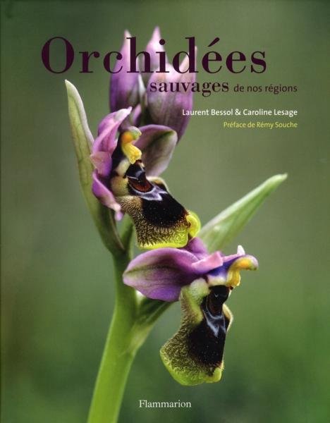 Orchidées sauvages de nos régions - Page 2 40985685_9444388