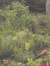 Tout ce que vous devriez savoir sur le jardinage - 4ème de couverture - Format classique