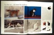 Les chats racontés aux enfants - Couverture - Format classique