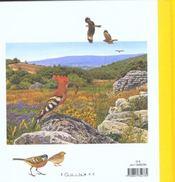 Abécédaire des oiseaux de provence - 4ème de couverture - Format classique