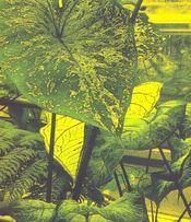Traite Des Plantes Tropicales - 4ème de couverture - Format classique