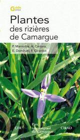Plantes des rizières de camargue - Intérieur - Format classique