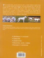 Dogue Argentin - 4ème de couverture - Format classique