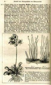 Synoposis der pflanzenkunde. - Intérieur - Format classique
