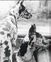 Lionel Kazan photographe raconté par sa fille - 4ème de couverture - Format classique