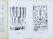 L'abri Blanchard des Roches (commune de Sergeac). Gisement aurignacien moyen. - Couverture - Format classique