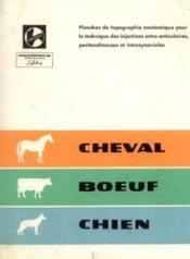 Cheval -boeuf -chien: Planches de topographie anatomique des injections intra articulaires, péritendineuses et intrasynoviales - Couverture - Format classique
