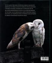La vie amoureuse des oiseaux ; étonnantes stratégies de reproduction - 4ème de couverture - Format classique