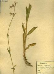 Herbier Naturel - 140 Planches - Couverture - Format classique