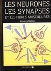 Les Neurones Les Synapses