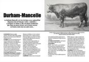 À nos vaches ; l'inventaire des races bovines disparues et menacées de France - Intérieur - Format classique