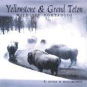 Yellowstone & Grand Teton Wildlife - Couverture - Format classique