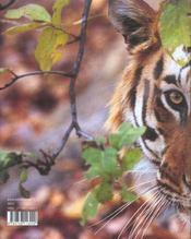 Les tigres - 4ème de couverture - Format classique