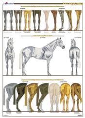 Planche hippologie ; les aplombs - Couverture - Format classique