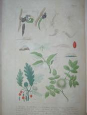 Phénomènes et métamorphoses, causeries sur les papillons, les insectes et les polypes. - Couverture - Format classique