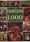 Les Champignons En 1000 Photos