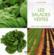 Les salades vertes ; culture, soin, conseils pratiques