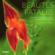 Beautés fatales ; le monde fascinant et cruel des orchidées sauvages