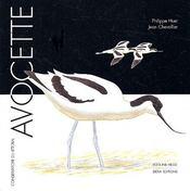 Avocette - Intérieur - Format classique