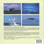 Nouvelle-Calédonie ; un rendez-vous pour les baleines - 4ème de couverture - Format classique