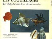 Les Coquillages - Les Chefs-D'Oeuvre De La Vie Sous-Marine - Couverture - Format classique