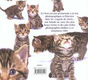 Regards de chats - 4ème de couverture - Format classique