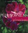 Pelargoniums Geraniums