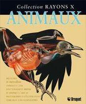 Rayons X - Animaux - Intérieur - Format classique