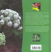 Herbes aromatiques ; de la ciboulette au romarin - 4ème de couverture - Format classique