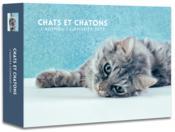 L'agenda-calendrier chats et chatons (édition 2020) - Couverture - Format classique